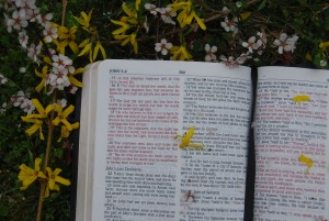 Bibleflowers