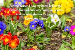 Ephesians 3;14-15