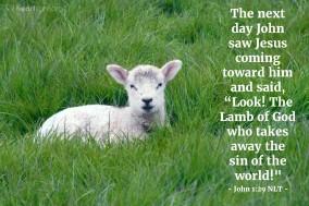 John 1;29